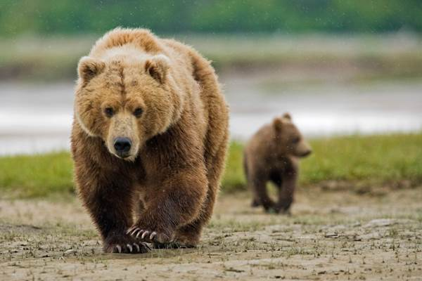 mother and cub